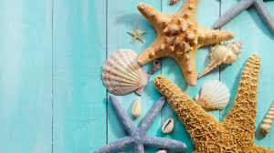 images of seashell wallpaper backgrounds sc