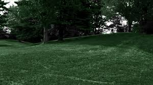 grass scenic touch forest monochrome woods green trees summertime