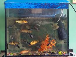 How To Make Fish Tank Decorations At Home How To Plan An Aquarium 11 Steps With Pictures Wikihow
