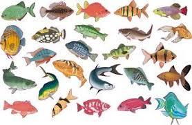 smarts art 25 tropical fish tile transfers stickers colour