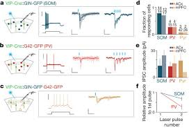 What Is Interneuron Cortical Interneurons That Specialize In Disinhibitory Control