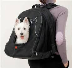 Gadgets For Pets Gadgets For Pets On The Go Sandy Robins Online