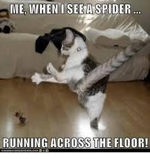 Spider Meme Misunderstood Spider Meme - 25 best memes about spider spider memes