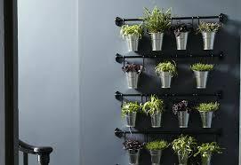 plantes cuisine decoration cuisine plantes aromatiques architects salary 2017 pour a