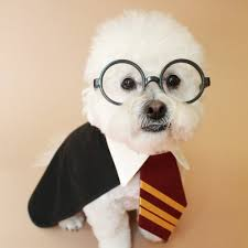 17 harry potter names perfect for your magical pet brit co