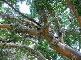 top 10 iconic african trees earth touch news network