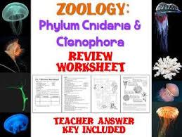 biology zoology u2013 phylum cnidaria and ctenophora review worksheet