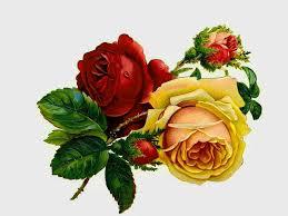 vintage rose wallpaper tianyihengfeng free download high