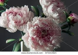 artificial peonies decoration artificial peonies vase on grey stock photo 673243921