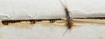 how to get rid of silverfish termitrust