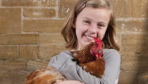 Good Backyard Pets Do Chickens Make Good Pets Animals Mom Me