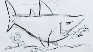 cartoon drawings of sharks drawing sketch library