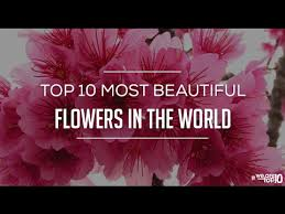 Pictures Of Beautiful Flowers In The World - top 10 most beautiful flower in the world world best beautiful