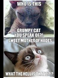 Ugly Cat Meme - the ultimate grumpy cat for michelle pinterest grumpy cat cat