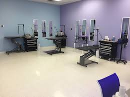 poochini pet grooming a professional pet salon in albuquerque