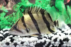Tropical Aquatic Plants - tropical fish exporter freshwater tropical fish aquatic plants