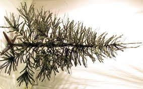 7 ft pre lit needle brown twig artificial tree with 550 ul
