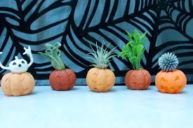 halloween aesthetic pumpkin air plant holders