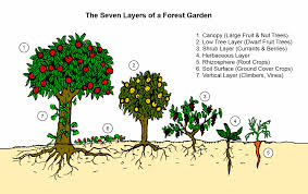 Fruit Garden Layout Garden Design Garden Design With Small Scale Intensive Systems