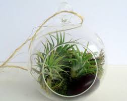 globe terrarium etsy