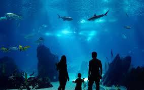 new england aquarium boston marine exhibits imax and tours