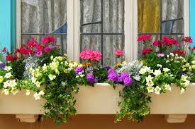 What To Plant In Window Flower Boxes - how to plant window boxes 10 simple tips reader u0027s digest