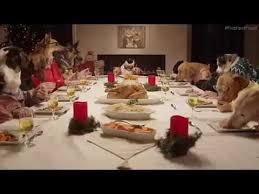 Dogs At Dinner Table Family Dinner On Christmas 13 Dogs And 1 Cat 13 Köpek Ve 1