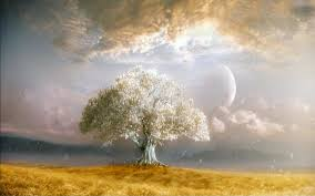 Tree Of Life by Tree Of Life Wallpaper Cool 1440x900 Tree Of Life Wallpaper