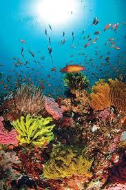 469 sea images sea ocean