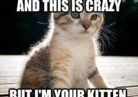 Cat Facts Meme - lovely cat facts meme cat facts on tumblr kayak wallpaper
