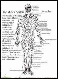 the human anatomy 5th grade worksheets education com