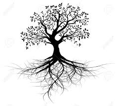 Tree Of Life by Tree Of Life Images Black And White Image Gallery Hcpr