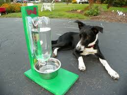 the awesomest coolest easiest water bowl for dogs cats 6 steps