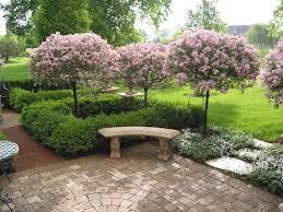 korean lilac tree houzz