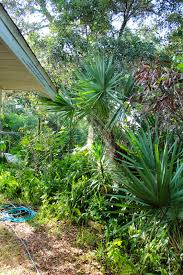 florida native plants list florida u0027s thorniest native plants phillip u0027s natural world