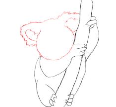 how to draw a koala draw central