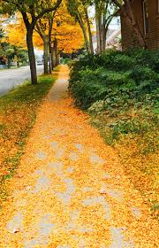autumn leaves trees pathway stock image image 45315119