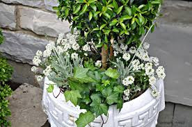 Eugenia Topiary Serendipity Refined Blog Summer Urns And Container Gardens Tips