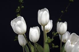 free images nature blossom white petal green botany