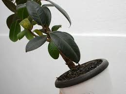 how to prevent bugs in your houseplants 6 steps with pictures
