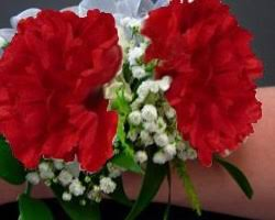 Red Carnations Red Carnation Corsages Carnation Corsages Canada Wholesale Red
