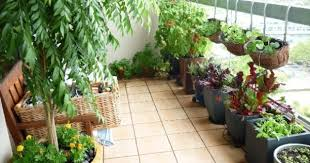 want to set up kitchen garden on your terrace check this