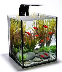 How To Make Fish Tank Decorations At Home Home Accessories Glamorous Aquascape Designs With Various Fish