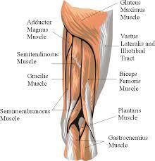 Anatomy Of Human Back Muscles Muscle Anatomy Of Human Back Muscular System Diagram Back Human