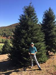 need a 20 tree call me papa noel trees
