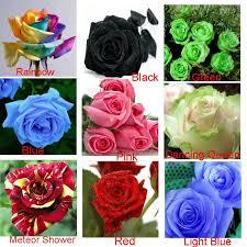 roses colors heirloom 9 colors 1800 seeds rainbow black green blue pink