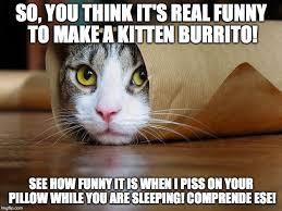 Funny Kitten Meme - funny kitten memes 16