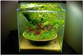 post your favorite aquascapes natural inspirations and beautiful