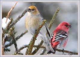 Backyard Birds Utah 7 Best Birds We U0027ve Seen In The Backyard Images On Pinterest