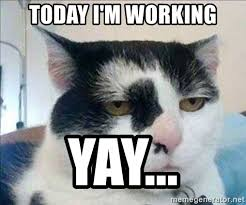 Yay Meme - today i m working yay serious cat meme generator